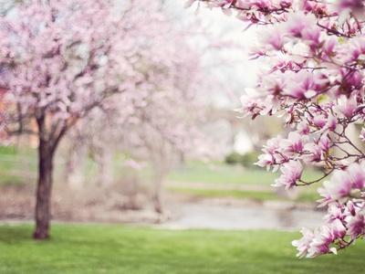 Frühlingstage abgesagt