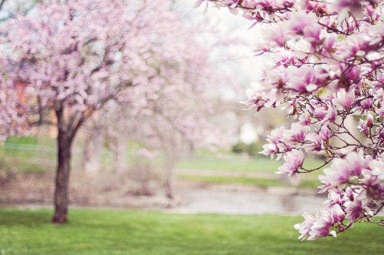 Melker Frühlingstage abgesagt